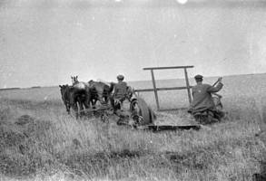 Grain harvesting in the fields by the reaping machine lead by a horse at the Einhart collective farm in Marxstadt Kanton, 1933.